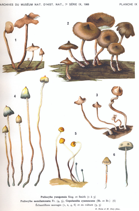 7 Types of Psilocybin Mushrooms You Probably Didn't Know About